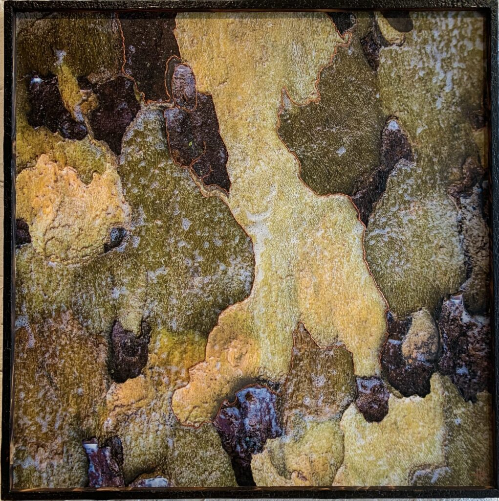 Embellished photograph From the 'Study of The London Plane Tree' series. Frame burned with shou sugi ban technique.