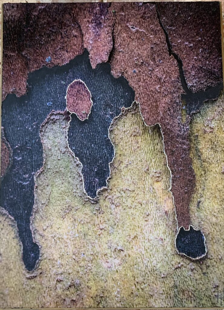 20.5x30 Archival print on wood panel. Embellished photograph From the 'Study of The London Plane Tree' series.